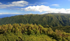 Green panorama: Mountains of the high inland area of Madeira (c. 2000m), covered in laurisilvan native forest. Four image photomerge.