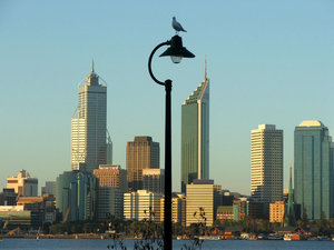 light rest: seagull resting on street light  at river's edge with Perth CBD in background