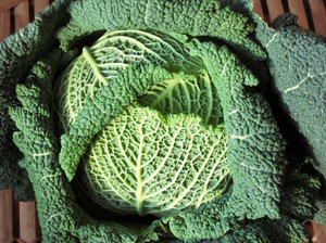 organic savoy cabbage texture