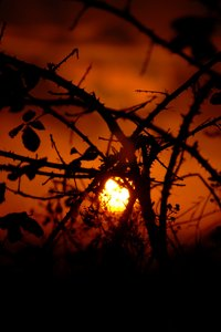 bramble sunset: setting sun caught, trapped in the brambles.
