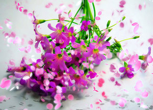 Springtime: A posy of pink flowers with a flurry of falling petals. A great illustration for Spring, gardening, love, creation - full of life and colour.