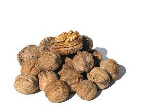 nuts,nuts