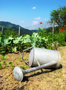 watering can: lying on the garden ground