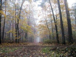misty autumn walkway