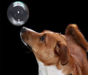 PUPPY AND BUBBLE