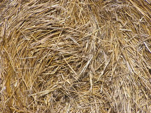 Hay: Some hay.
