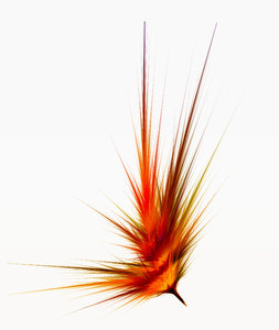 Phoenix Feather, abstract