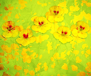 Nasturtium Abstract 4