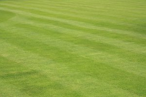 Lawn: Lawn with stripes