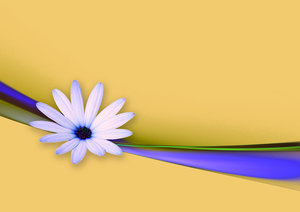 Flower and Ribbon abstract