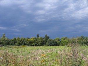 clouded wild flower meadow