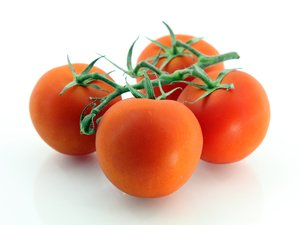 TOMATO-TOMATOES