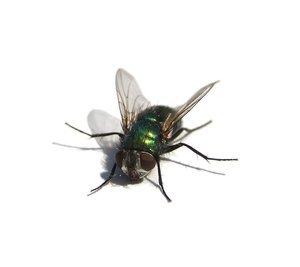 Fly: Visit http://www.vierdrie.nl