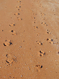 footprints - coming & going