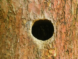 woodpecker's cave