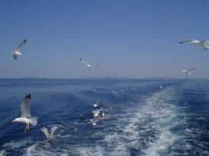 Sea and sea-gulls 1