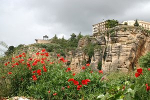 Poppies on Ronda's cliffs