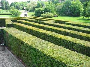 yew hedge maze 3
