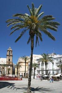 Palms in Cadiz