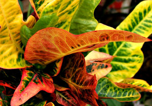 foliage colour2