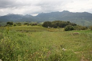 Rural Andalucia 1: A rural landscape in Andalucia, Spain.