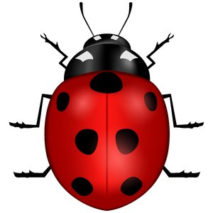 Vector Ladybug: Vector ladybug on the white background