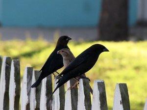 Friends of Birds