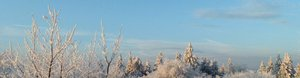 Frosty Morning (2)