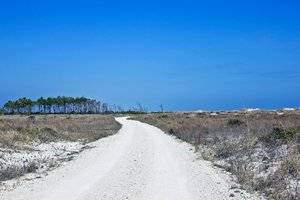 Path To The Beach: White sand road to the beach. Quartz, gives the sand the white coloring.