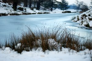 frozen river bank 2