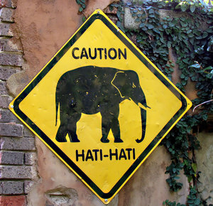 elephant walk warning
