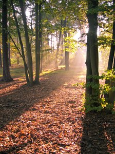 autumn forest light 3