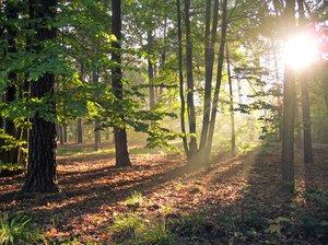 autumn forest light