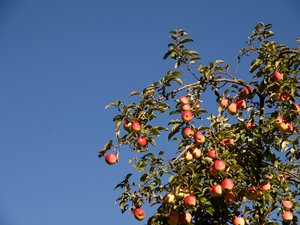 Apples and blue sky
