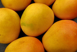 mango colour3: colourful golden ripe fresh mangoes