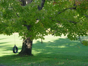 Tire Swing on Maple Tree