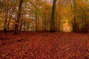 Forest bed in autumn - HDR