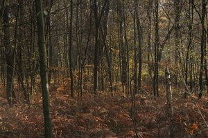 Deep Forest: Deep forest in autumn