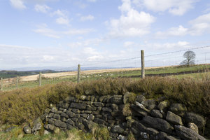 Drystone wall landscape 2: Landscape in northern England in early spring.