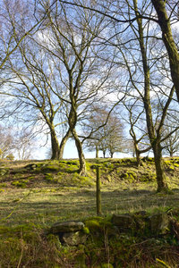 Landscape in early spring: A woodland margin in northern England in early spring.