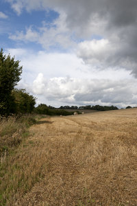 Harvested field: A harvested wheat field in West Sussex, England.