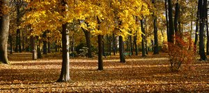 autumn park 1