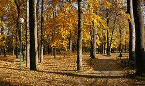autumn park 3