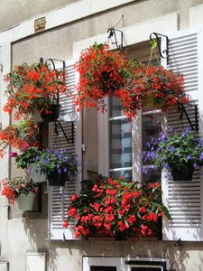 flowering window