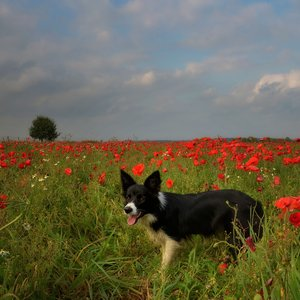 A bordie  in a red field