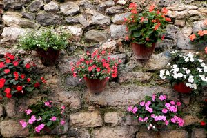 assorted potted flowers