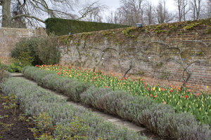 Walled garden: An old walled garden in Surrey, England, in early spring.