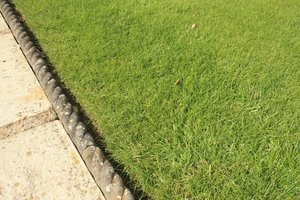 Edge of a grass lawn