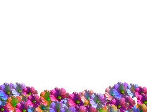 Flower Garden on Flowers  Great For Notes  Cards  Gardening Sites  Spring Or Summer