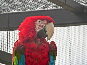 red-and-green macaw: here you can read more about these macaws: